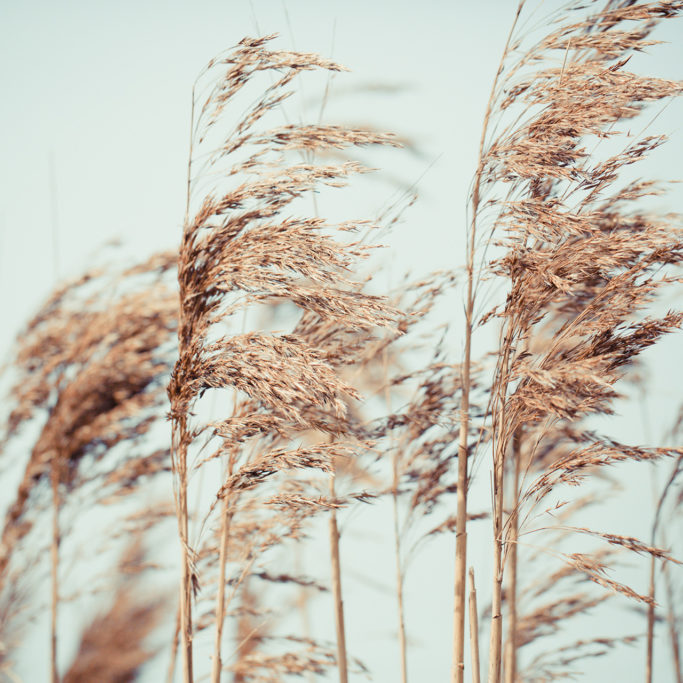 Hautle-Wind-Farn